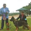 G Ch Tripphill's ScahroArk DeJa vu Logan  (Logan_ going Best of Breed under noted judge Butch Stiefferman 4/18, Austin Texas